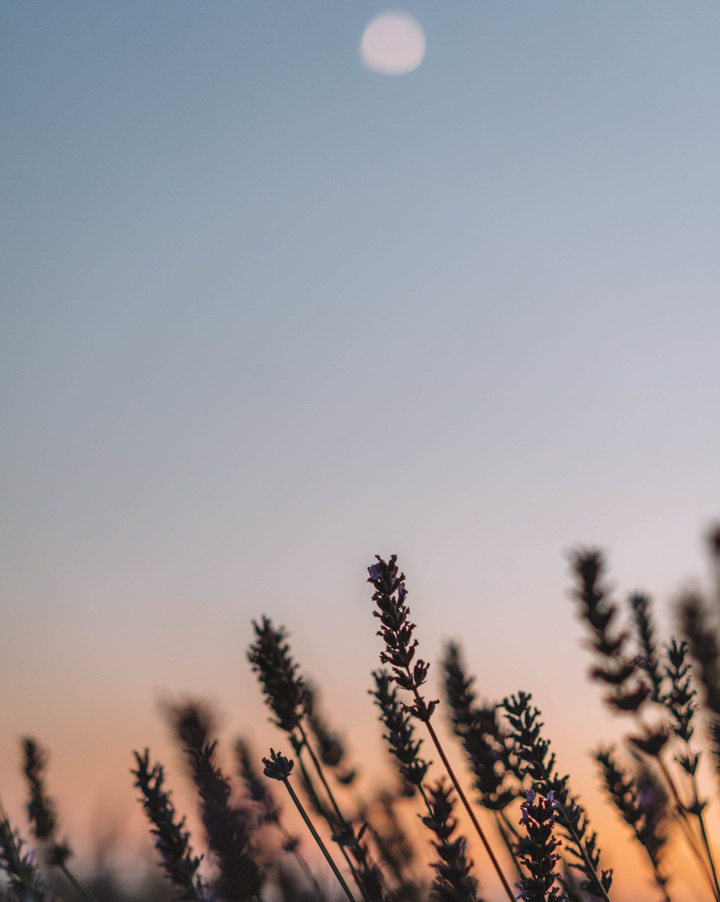 Apprendre la photo de paysage lors des couchés de soleil à Valensole