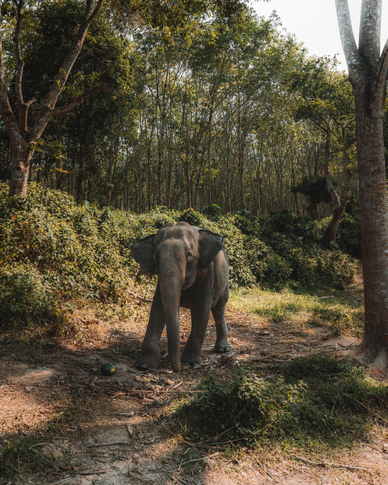 Sanctuaire d'éléphant Thaïlande idées de voyage