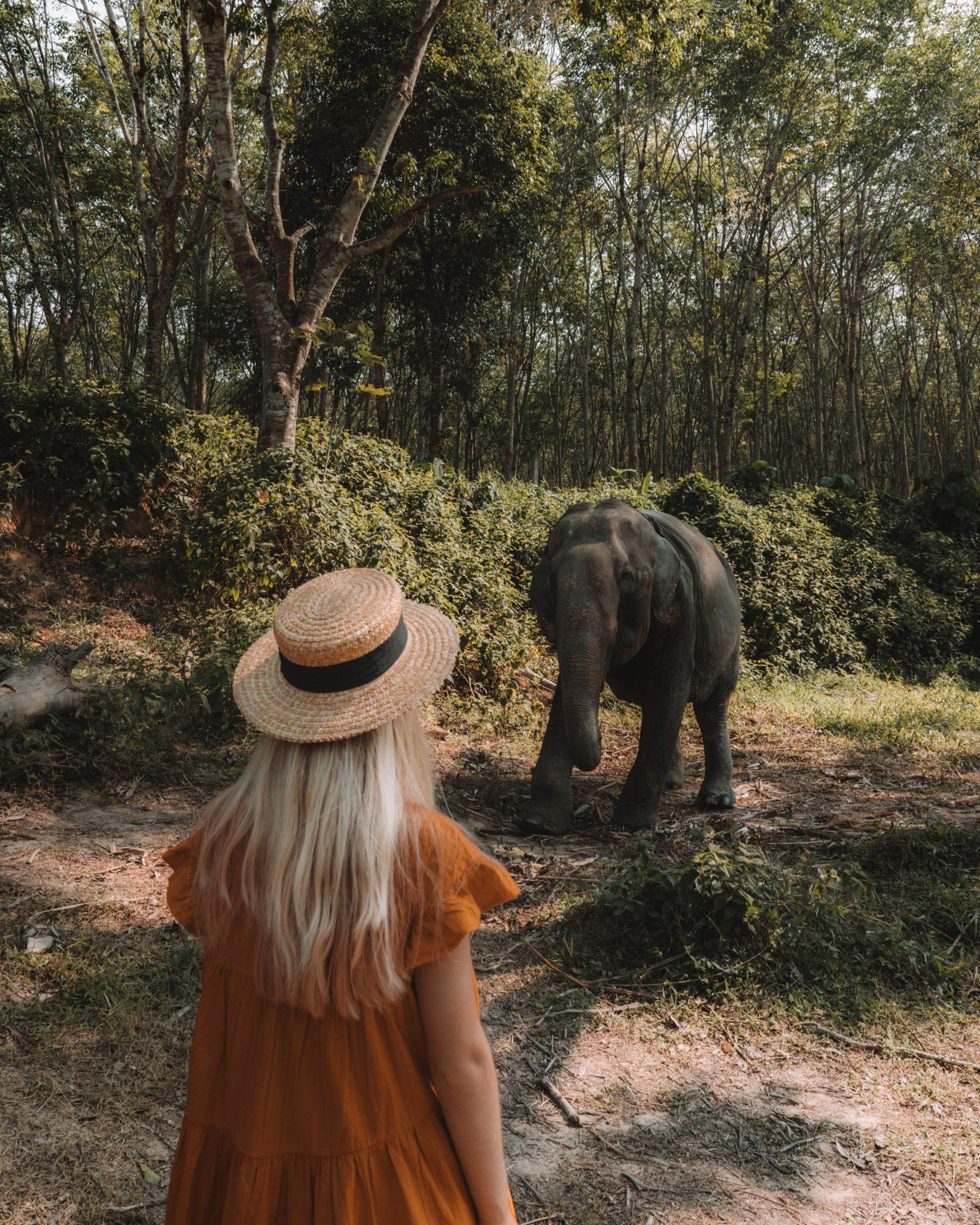 Sanctuaire d'éléphant en Thaïlande